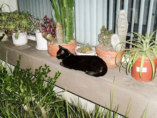 Sophie the Black Cat