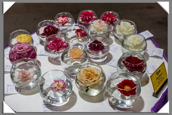 Rose show at the 2013 San Diego County Fair