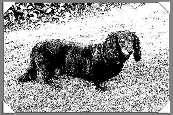 Dog of the Week sketch