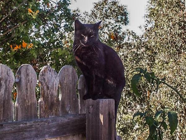 Sophie on fence