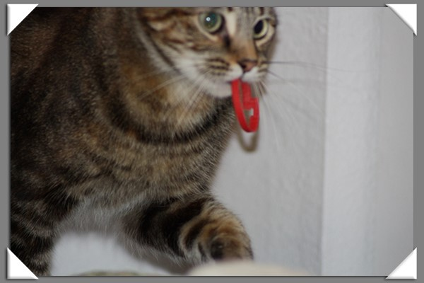 Zoey the Cool Cat and her red ring