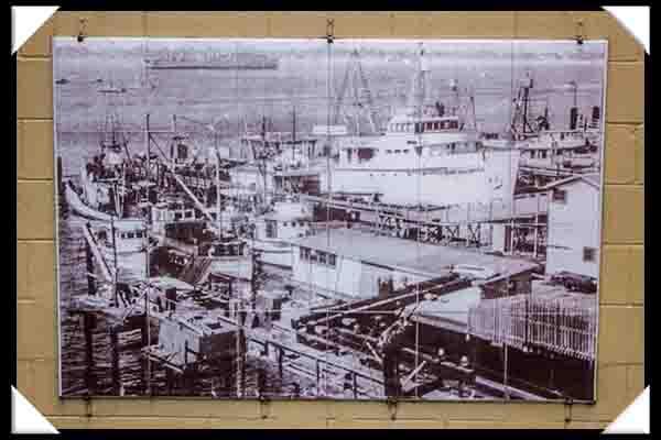 Tuna boats