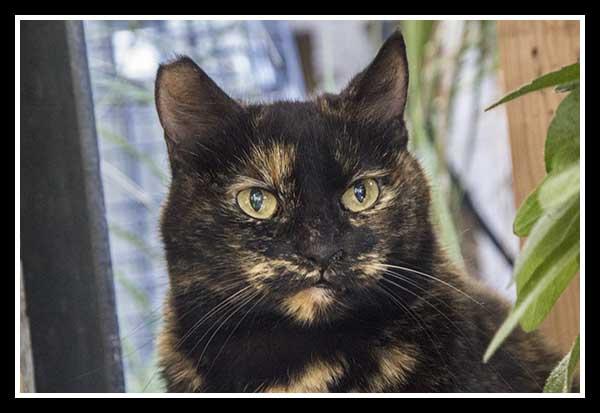 Home Depot cat