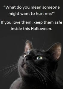 Keep your black cat safe!