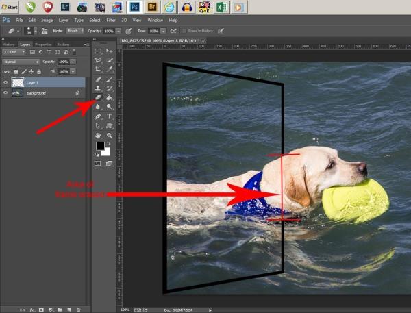 Erase frame over dog