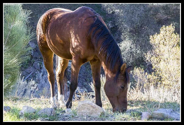 Horse along U.S. Route 80 in San Diego County