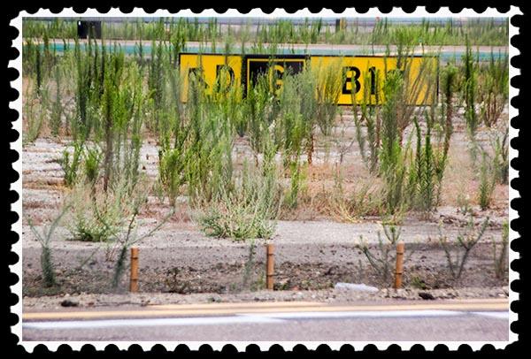 Not weeds