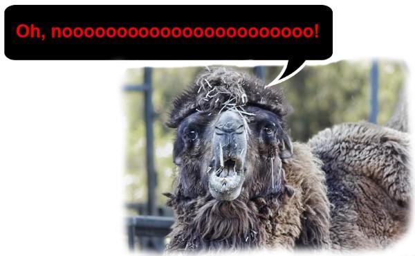 Mr. Bill camel