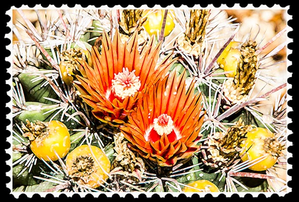 Photographic Art—Cactus Flowers