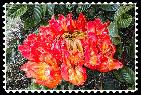 Photographic Art—African Tulip Tree Flower