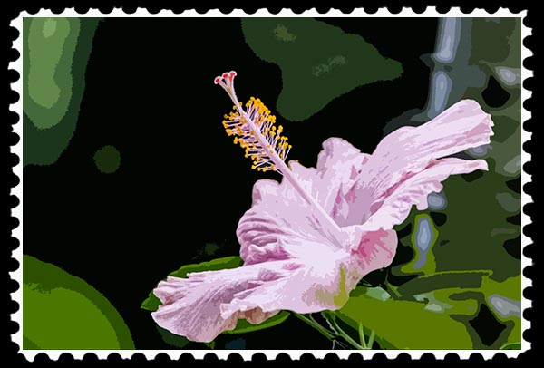 Photographic Art—Pink Hibiscus