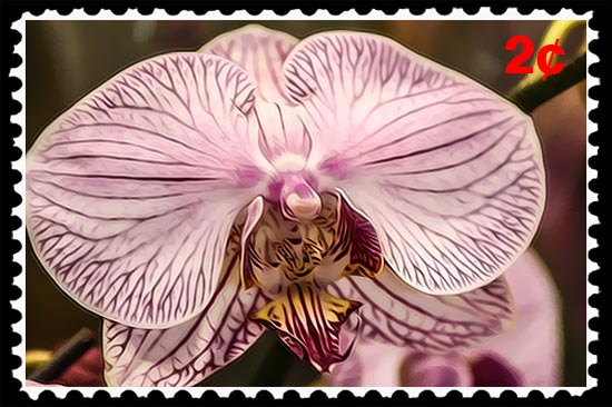 Photographic Art featuring orchis, by Russel Ray Photos of San Diego, California