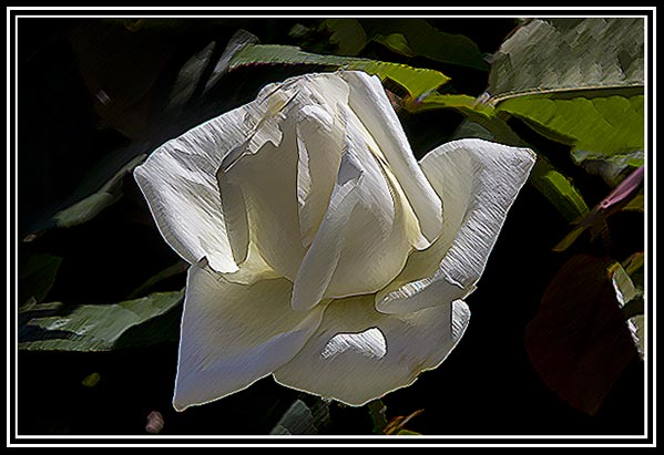 Photographic Art of a rose