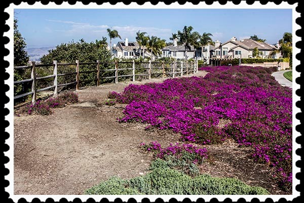 Ice plant picture by Russel Ray Photos