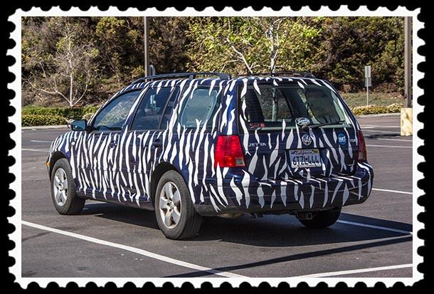 Zebra car