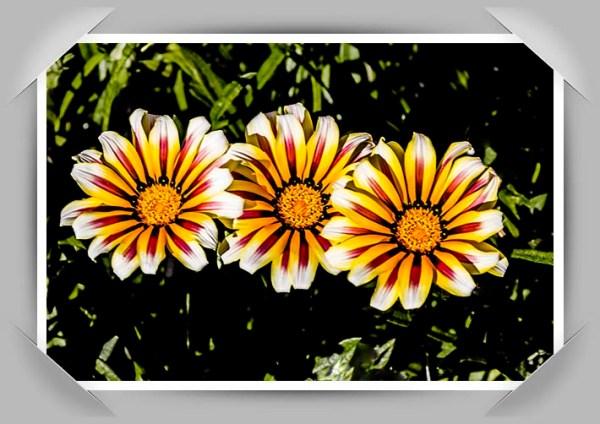 Flowerus nameus var. iforgotii