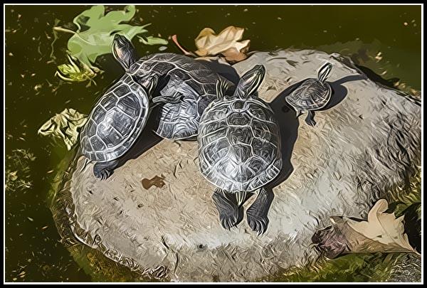 Turtle family Photographic Art