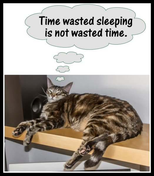 Time wasted sleeping is not wasted time