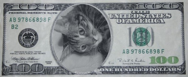 Zoey the Cool Cat $100 bill