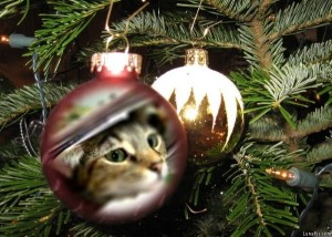 Zoey the Cool Cat Christmas ornament