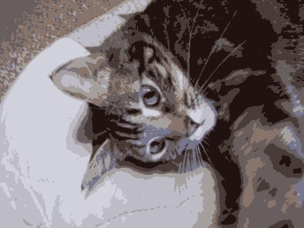 Zoey the Cool Cat painting