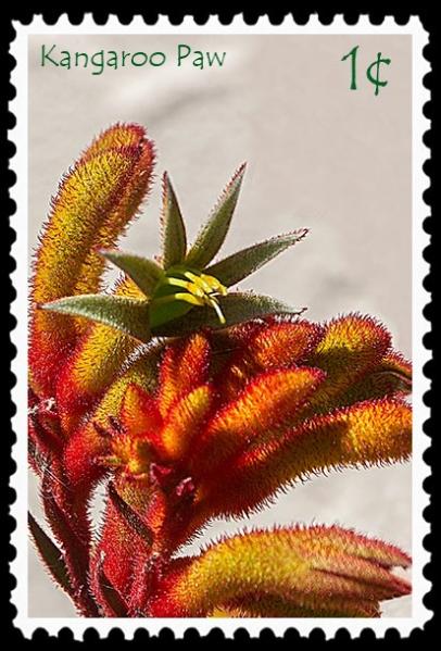 1¢ Kangaroo Paw stamp