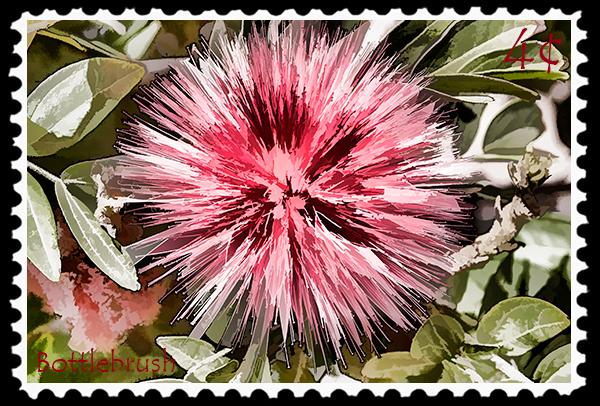 4¢ Bottlebrush stamp