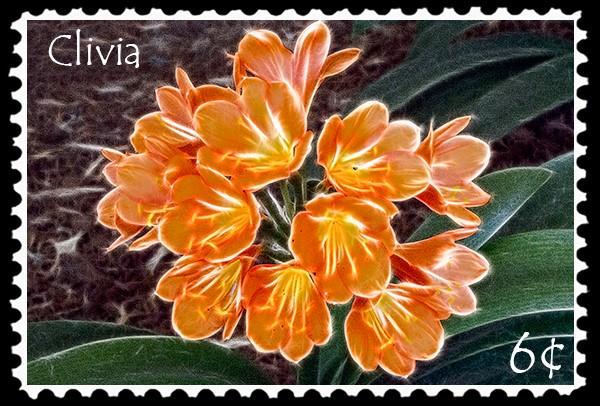 6¢ Clivia stamp