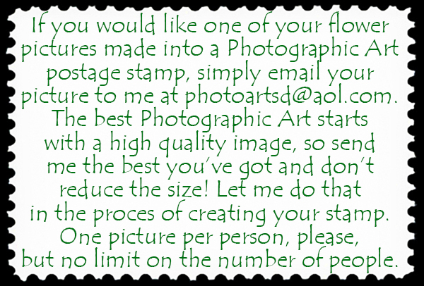 Photographic Art stamp offer