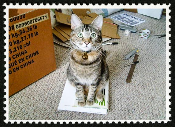 Zoey the Cool Cat stamp