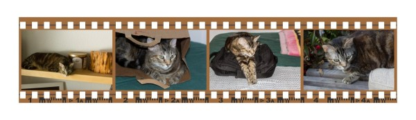 Zoey the Cool Cat film strip