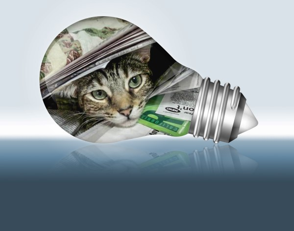 Zoey the Cool Cat light bulb