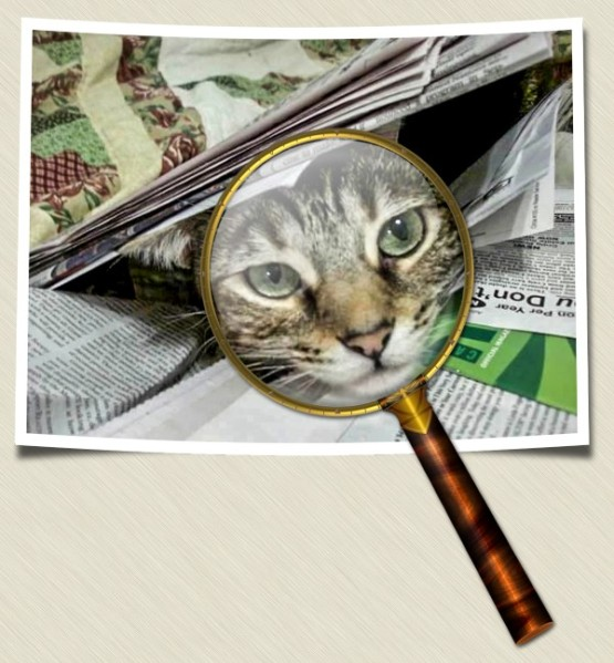 Zoey the Cool Cat under the magnifying glass