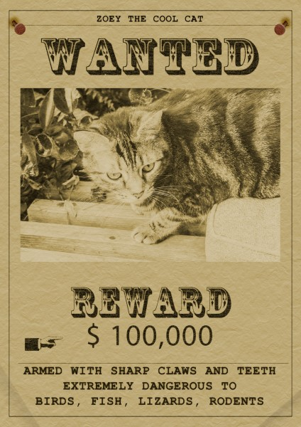 Zoey the Cool Cat wanted poster
