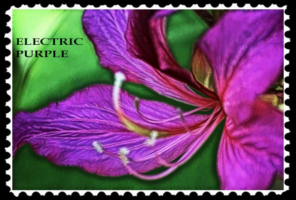Electric Purple Stamp