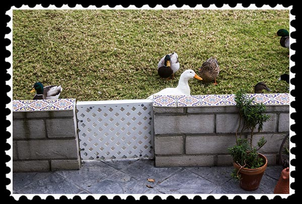 Birds wanting food
