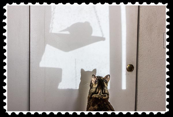 Zoey the Cool Cat stalking a mourning dove