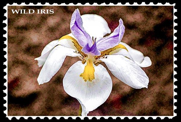 Wild Iris stamp