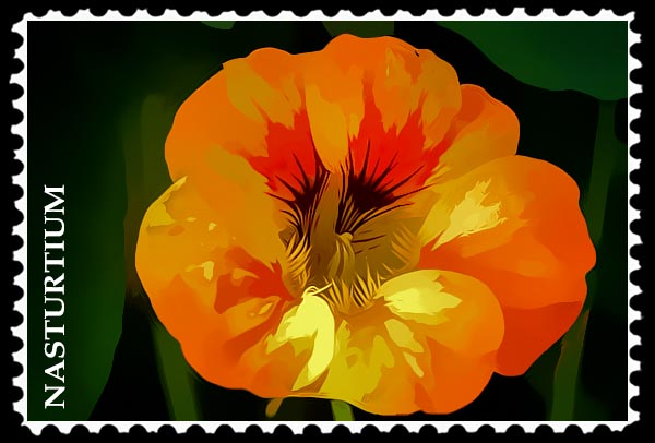 Nasturtium stamp