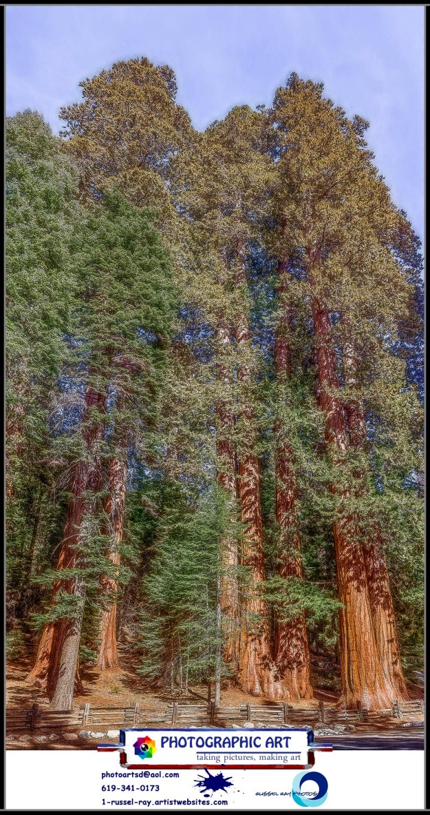 The Giant Forest in Sequoia National Park