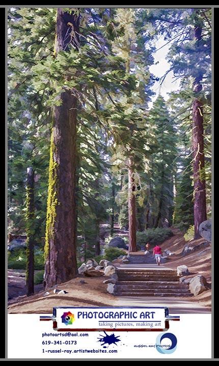 Walking among giants in Sequoia National Park