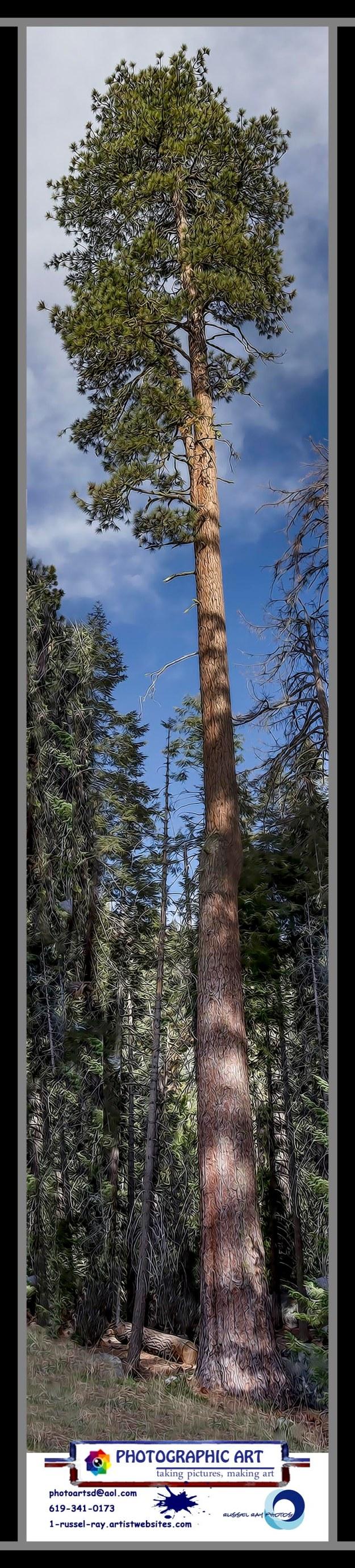 Really tall tree