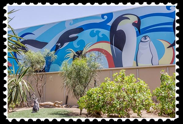 Great Penguin Wall at SeaWorld San Diego