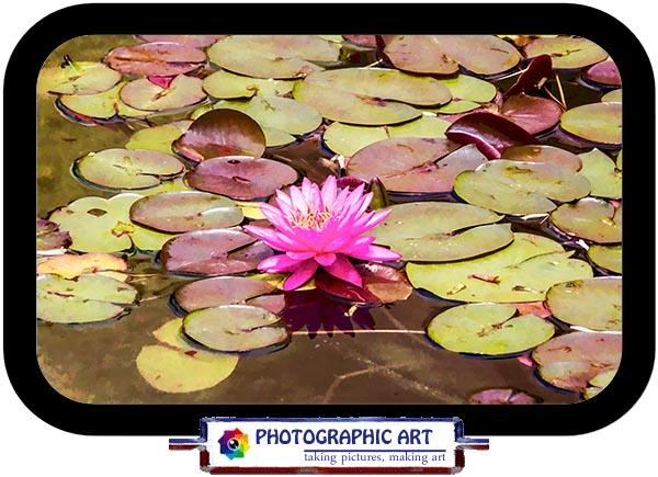 IMG_5430 floating faa framed