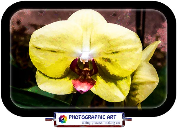 Orchid from San Diego's Balboa Park