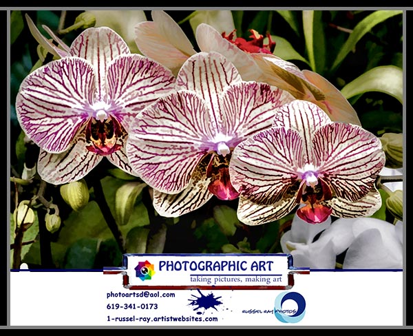 Orchid Photographic Art by Russel Ray Photos of La Mesa California