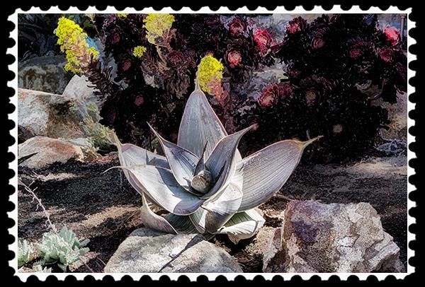 Bird Song plants