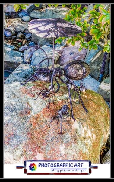 Bird Song rock ants