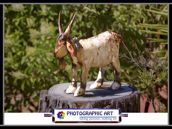 Bird Song goat