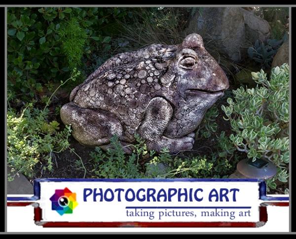 Bird Song frog